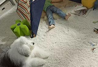 Pet-Friendly Carpet